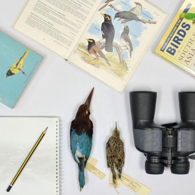 dsc_4381 be_birds 800px