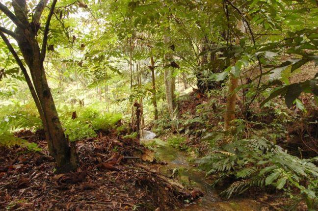 rimba ilmu central wetland 2007 dsc_4355 edit_ben 800px