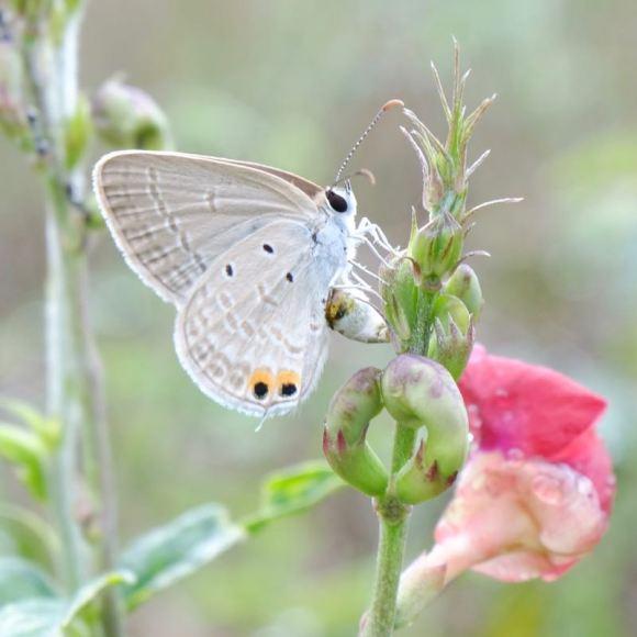 Pollinator module photo 800px