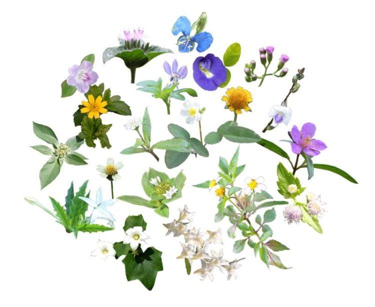 Wildflowers_final v3 800px