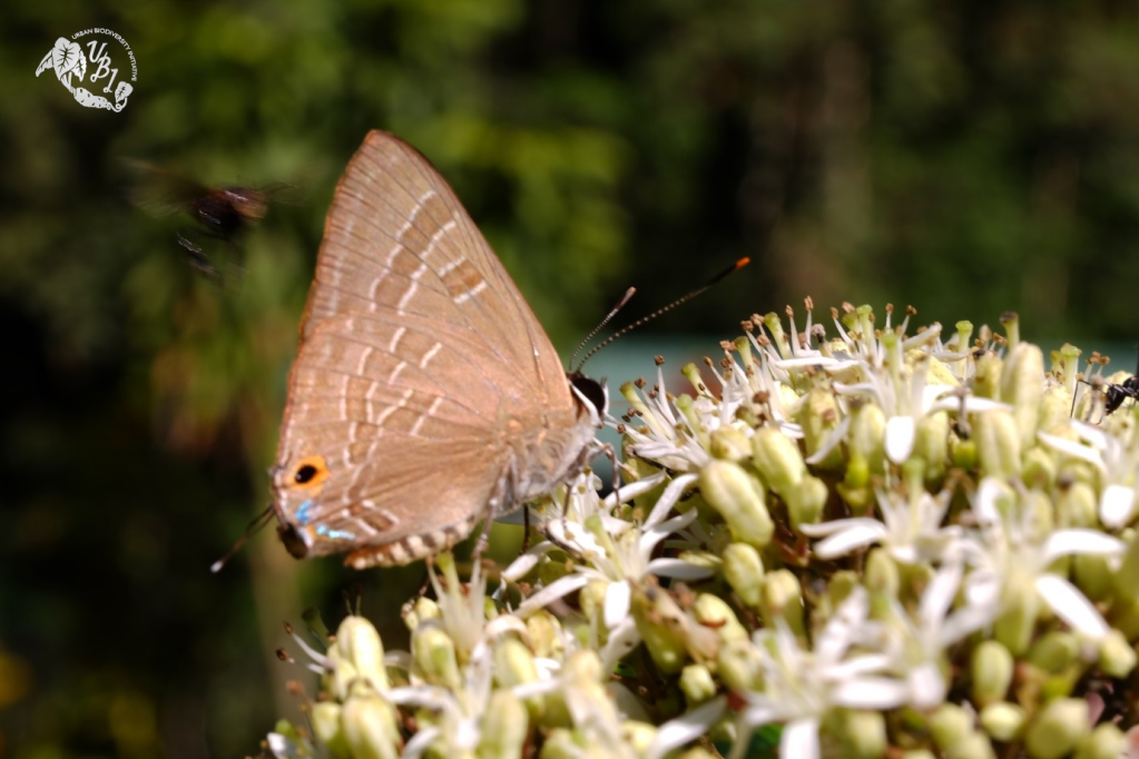 butterfly and a cluster of flowers